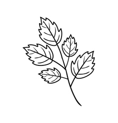 Silhouette toothed leaves with ramifications vector