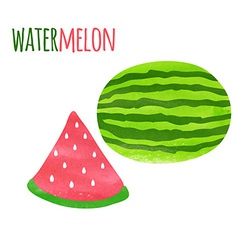 Abstract colorful watercolor watermelon isolated vector