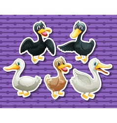 Different color of ducks vector image vector image