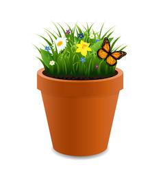 Flowers in pot vector
