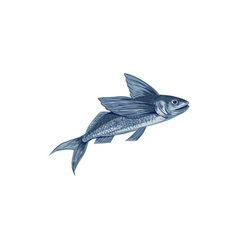 Flying fish drawing vector