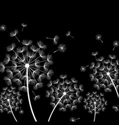 black background with stylized white dandelion vector image