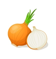 Onion isolated on white vector