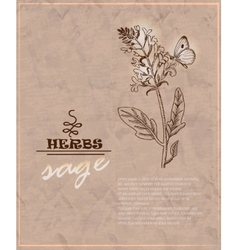 Vintage background with sage on old paper vector