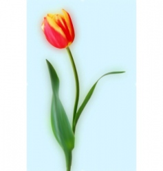 yellow and red tulips vector image