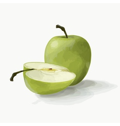 Beautiful green apples vector