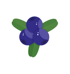 Blueberry on white background vector