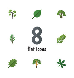 Flat icon bio set of jungle tree alder and other vector