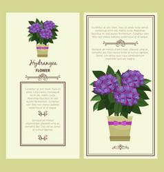 hydrangea flower in pot banners vector image vector image