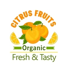 Orange citrus fruits icon organic fresh tasty vector