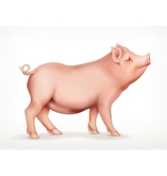 Pig icon vector image