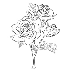 Sketch black and white rose vector