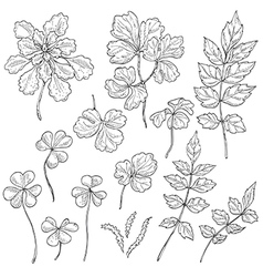 doodle leaves vector image vector image