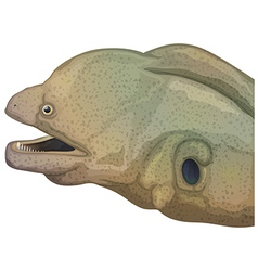 Giant moray eel head vector