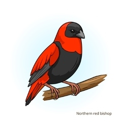 Northern red bishop bird educational game vector