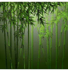 realistic bamboo vector image