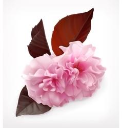 Cerry blossom flower vector image