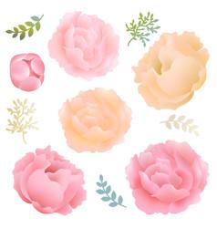 Flowers peony vector