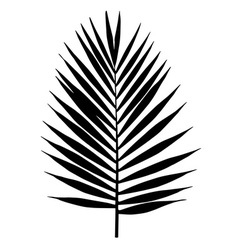 Palm leaf silhouette tropical leaves vector