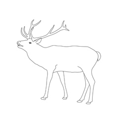 Coloring book page deer with antler vector