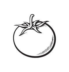 Sketch style drawing of shiny ripe tomato vector