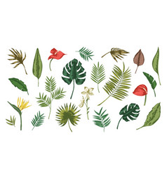 collection of tropical leaves of various plants vector image vector image