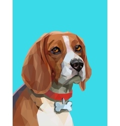 Low poly portrait of beagle dog vector