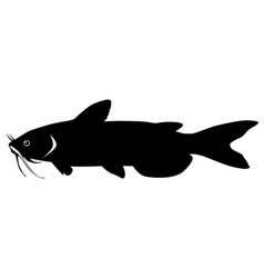 Silhouette of catfish vector image