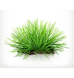 Fresh grass icon vector image