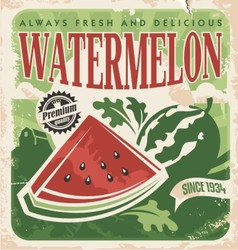 Vintage poster template for watermelon farm vector image vector image
