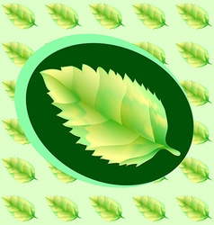 Green leaf of the tree vector