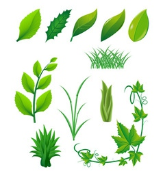 icon set of green leaves and plants vector image