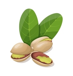 Pistachios with leafs isolated on white vector image vector image