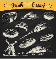 Set fresh draw drawn bread wheat sketch vector image
