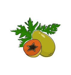 Papaya isolated on white vector