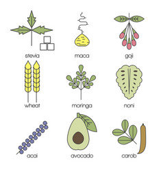 superfood color line icons set vector image vector image