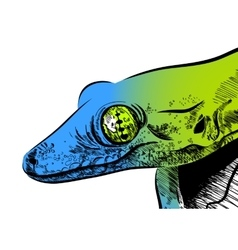Picture with lizard  graphics on white vector