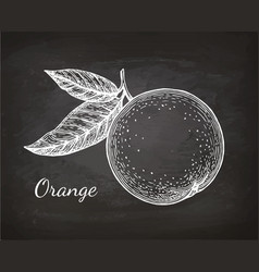 chalk sketch of orange vector image vector image