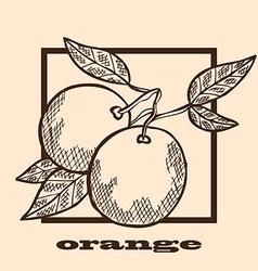 hand drawn oranges vector image vector image