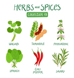 Herbs and spices collection 13 vector image