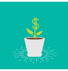 Dollar plant in the pot vector
