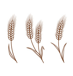 Isolated wheat ears set vector