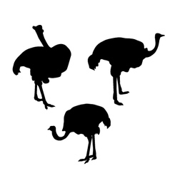 Ostrich silhouette set vector