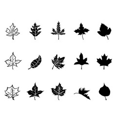 Black Maple leaves silhouette vector image