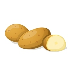 Potato isolated on white vector image vector image