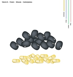 Black bean with vitamin b protein minerals vector