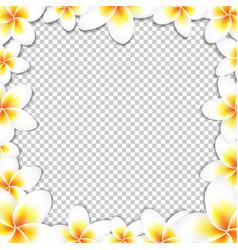 frangipani frame vector image vector image