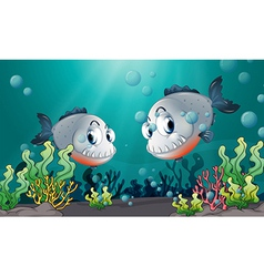 Two big grey fishes under the sea vector image
