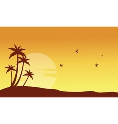 Silhouette of palm and bird at sunset vector