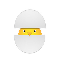 Yellow chick peeking out of two halves of a shell vector